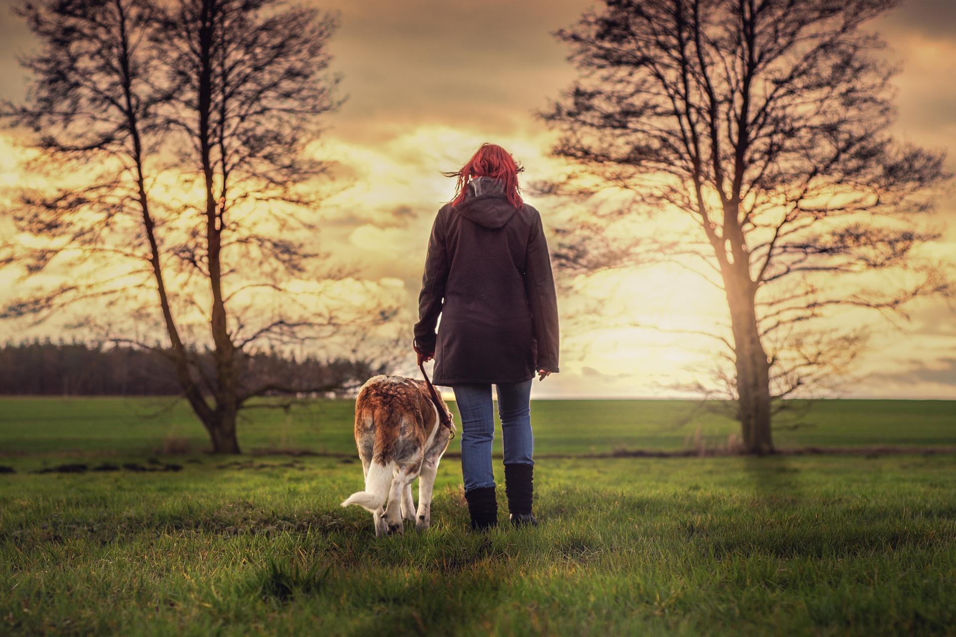 landscape-dog
